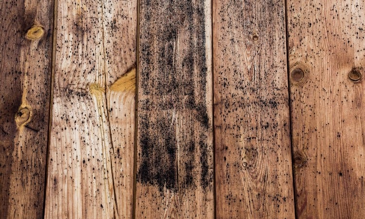 Black Mold On Wood Deck